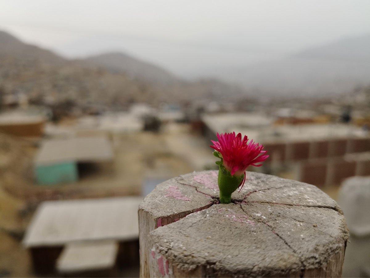 Cerros al profumo di speranza
